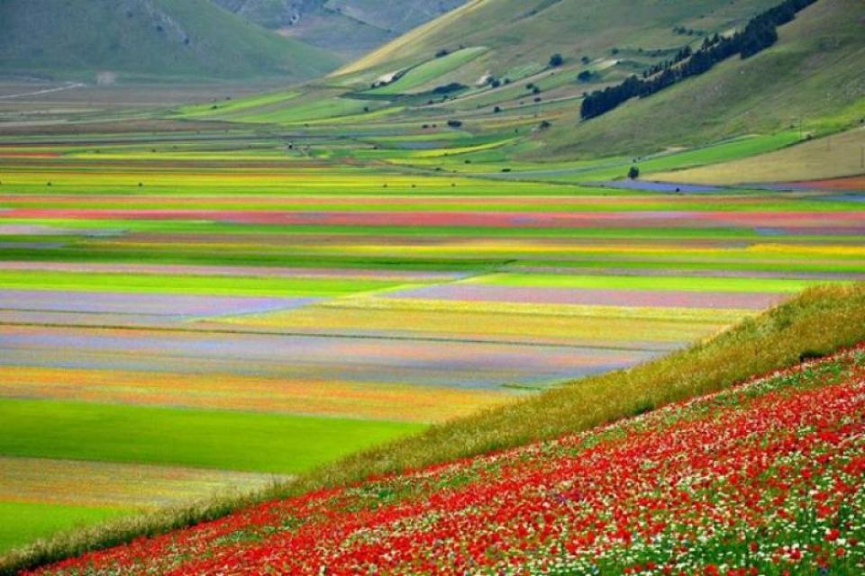 La Fiorita: The Flowering of Castelluccio di Norcia